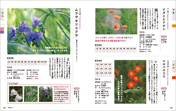 四季の雑草図鑑